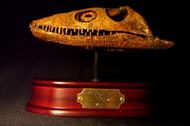 Plesiosaurus Skull Replica by DinoStoreus