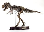 Tyrannosaurus Skeleton by DinoStoreus