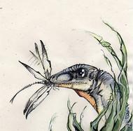 Scipionyx by Richard