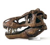 Tyrannosaurus 1:4 Skull Model by DinoStoreus