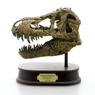 Tyrannosaurus Skull Replica by Favorite Co.