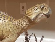 Psittacosaurus Resin Kit by Foulkes