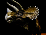 Triceratops by Papo