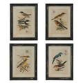 """19"""" 4 Asst Bird Prints"""