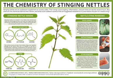 Benefits of Nettles