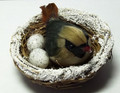 Bird on Nest - Brown - Large