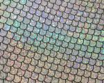 1/2 inch Tag Collar - Mystical Mermaid Silver Pleather