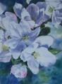 Apple Blossoms (Orig)