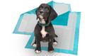 Basic Puppy Training Pad 17&quot;x24&quot; (Case of 1200 Pads)