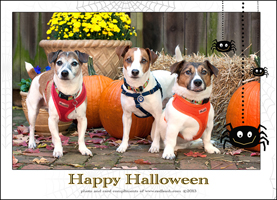 Paws Click & Treat Day with Red Leash Pet Photography