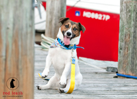 Ben, the mascot of Paws pet boutique, photographed by Red Leash