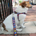Step-in Nautical Dog Harnesses made in USA at PawsPetboutique.com