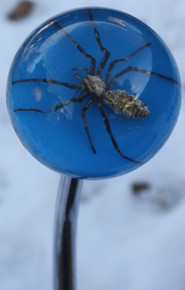 Blue Stinger Spider Shift Knob