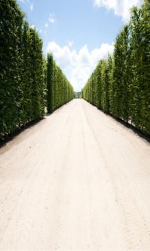 Cypress Lane Backdrop