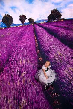 Lavender Fields Backdrop
