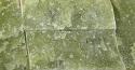 Verde Cina