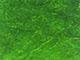 verde_liscio_thumb.jpg