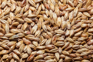 GoldSwaen© Belge (CaraBelge), The Swaen Malt 1 lb
