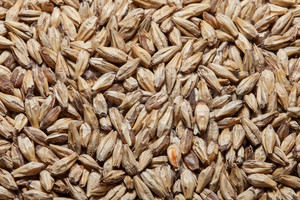 GoldSwaen© Light (CaraFoam), The Swaen Malt 1 lb
