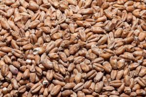 Red Wheat Malt, Briess 1 lb