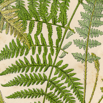 """Botanical Fern"" Patterned Paper, 10 pack"