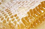 honey-92699.1369923269.356.300.jpg