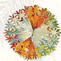 Assorted Foil Sukkah Decorations