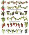 Grape Garlands