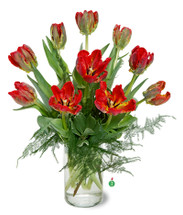 Beautiful Fresh Tulips, hand delivered locally.