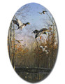 SafeArt Magnet Picture - Green Timber Mallards, Ducks