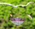 Aspects Hummingbird Feeder Mini HummBlossom Humm Blossom 4 oz Plum Color USA