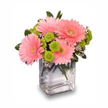 FRUIT SORBET Gerbera Bouquet