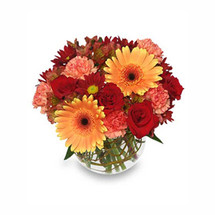 Hot and Spicy - Gerber Daisy, Roses and Carnations adorn this lovely modern arrangement
