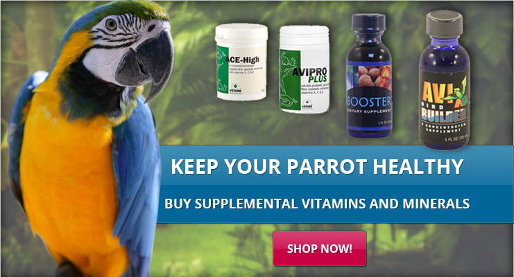 parrot-slide3new.jpg