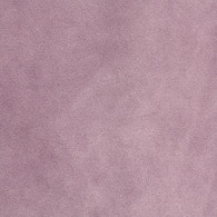 Empress Lilac
