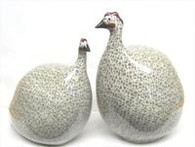 Guinea Hen Medium