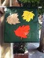 Fall Leaves TFS