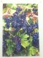 Bountiful Vineyard Garden Flag