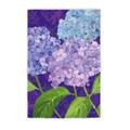 Purple Passion Hydrangeas