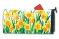 Daffodils in Bloom Mailwrap