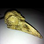 Crow Skull resin