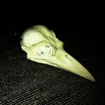 Crow skull pendant, glow in the dark