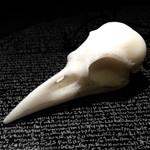 Crow skull, marble
