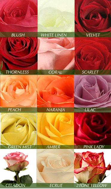 fd-roses.jpg