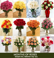 Monthly Roses