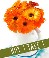 Darling Dear: BUY 1 TAKE 1