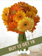 Sunburst: Buy 12 Get 18!
