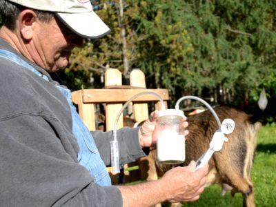 easy-goat-milker.jpg