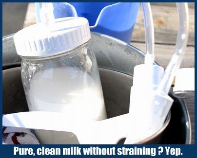 goat-milker-pure-milk.jpg