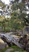 Coxs River 2